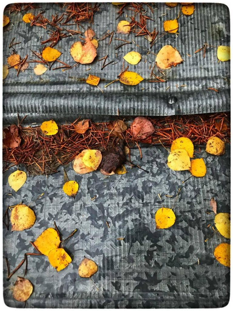 the yellow leaves are randomly repeated, creating a unique photograph