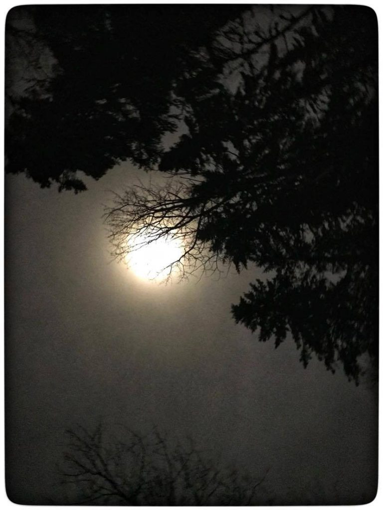 the bright light of the moon enhances the dark tree silhouettes