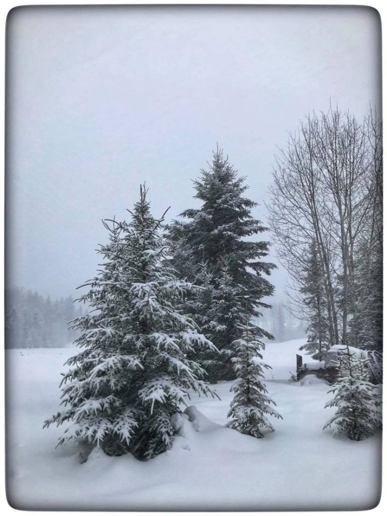 the rough spruce boughs against the smooth snow creates contrast